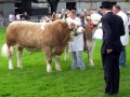 Simmental World Congress 2008 (418)