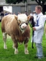 Simmental World Congress 2008 (421)