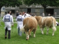 Simmental World Congress 2008 (422)