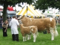 Simmental World Congress 2008 (423)