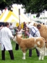 Simmental World Congress 2008 (424)