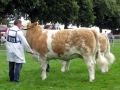 Simmental World Congress 2008 (425)