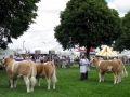 Simmental World Congress 2008 (427)