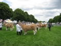 Simmental World Congress 2008 (428)