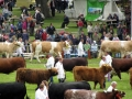 Simmental World Congress 2008 (44)