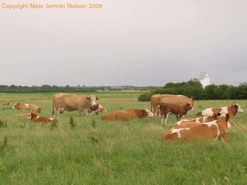 gmd003-sneumgaard-juli-2008-17