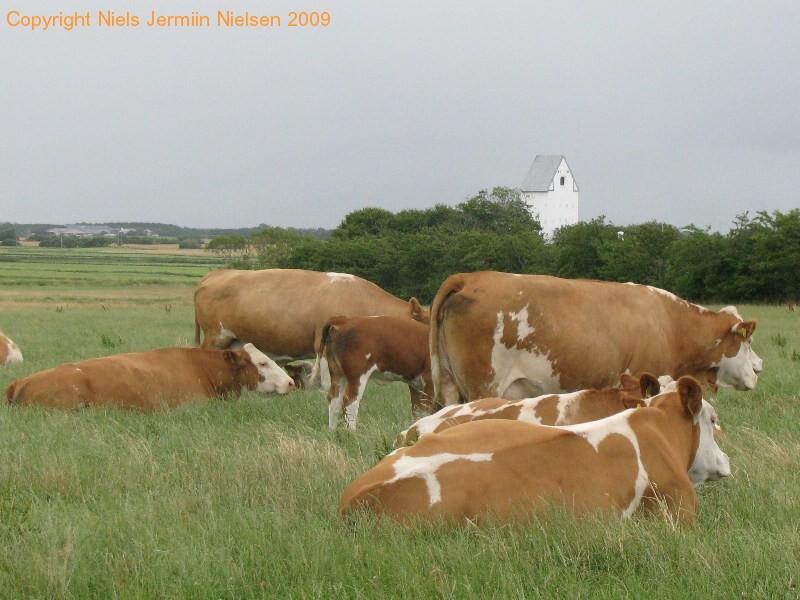 gmd004-sneumgaard-juli-2008-14