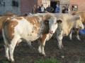 visitors021-sneumgaard-2011-5