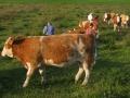 visitors031-sneumgaard-2011-11